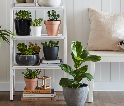 5 Types of Suitable Plants For Your Home