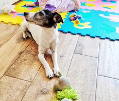 baby and pet proofing your property!